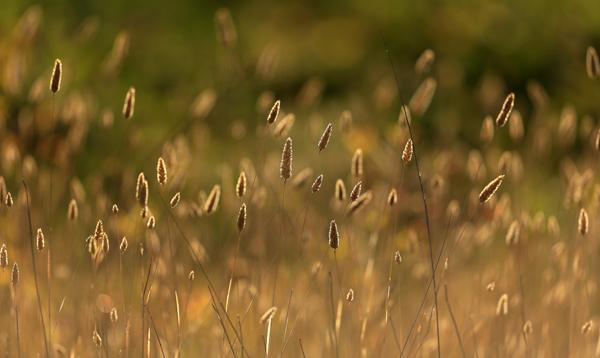 kp0822_Laguna_weeds