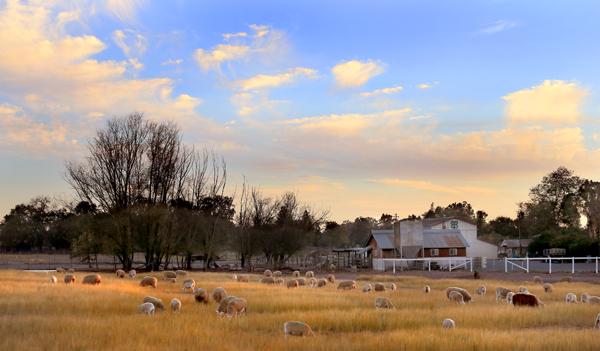 kp1009_Pozzi_ranch