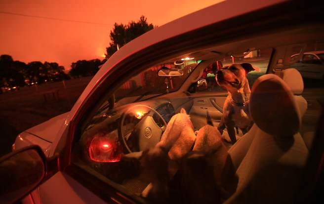 Animals were evacuated too off Morgan Valley Road near Lower Lake during the Rocky Fire, Wednesday evening July 29, 2015. (Kent Porter / Press Democrat) 2015