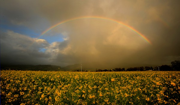 A late season storm produces a rainbow in the Alexander Valley, Thursday Feb. 18, 2016. (Kent Porter/ Press Democrat)