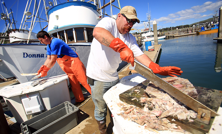 Bodega bay crab season 2015 autos post for Bodega bay fishing charters
