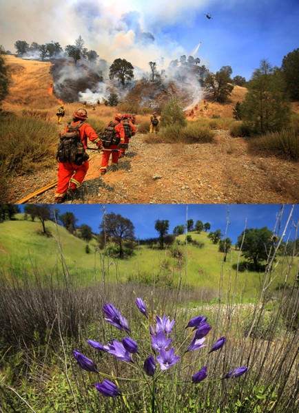 The Rocky fire burned in to August 2015, jumping Highway 20 at one point, sending firefighters scrambling. On April 15, wildflowers and green grass dominate the same hillside. (Kent Porter / Press Democrat) 2016