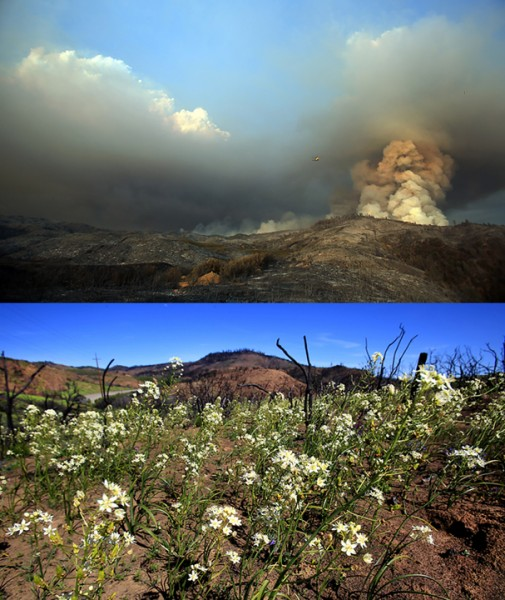 The Rocky fire in July 2015.  Below, April 2016, wildflowers bloom. (Kent Porter / Press Democrat) 2016