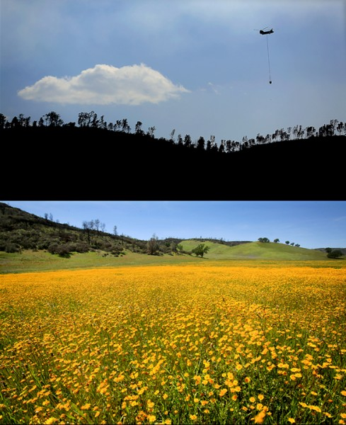 The Rocky fire spread in to Colusa County at the intersection of Highway's 16 and 20.  Now, the valley is carpeted in flowers. (Kent Porter / Press Democrat) 2016.