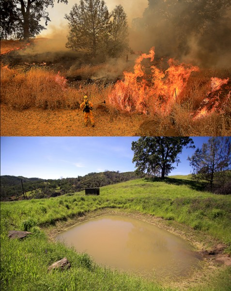 Firefighters from Windsor, Geyserville and Cloverdale set backfires on the Rocky fire in July 2015 in the footprint of a drought stricken farm pond. On Friday April 15, 2016 winter rains have partially filed the pond.   (Kent Porter / Press Democrat) 2016