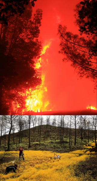 Before: Valley fire Sept. 2015. After: Valley fire April 2016. (Kent Porter / Press Democrat)