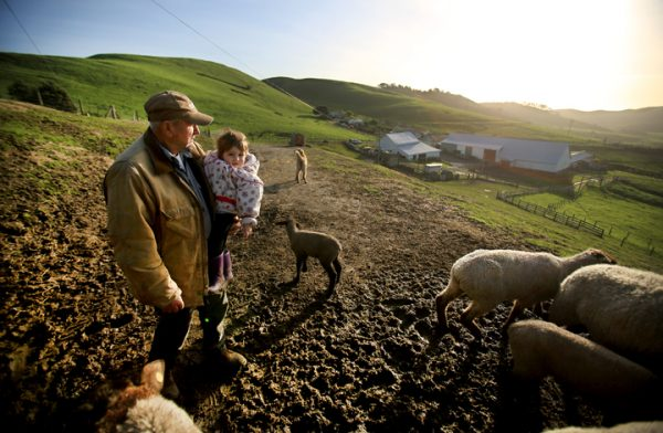 Rich Grossi and his great granddaughter Emma Ferrero take a break from feeding sheep and other livestock at the historic M Ranch in the Pt. Reyes National Seashore, Monday March 14, 2016. (Kent Porter / Press Democrat) 2016